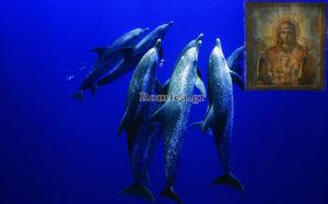 Delfinii și icoana Maicii Domnului. Slăvit să fie numele Preacuratei în veci!