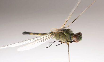 CIA a folosit drone-insecte pentru a răspândi boli încă din anii '70. Prin implantarea cipului, controlul unei ființe vii poate fi preluat din exterior.