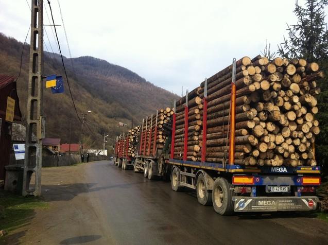 Informație-șoc: Holzindustrie Schweighofer RECUNOAȘTE că în fabricile din România sosesc zilnic 70 de camioane cu bușteni, adică peste 400.000 de tone anual!