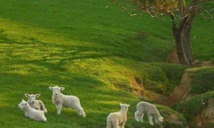 Din mâna păstorilor va cere Domnul oile când va veni să facă judecată între oi