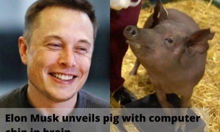 Elon Musk, co-fondatorul Neuralink, a prezentat implanturile de microchip-uri în creierul unor porci vii. Transferată la oameni, această tehnologie ar facilita optimizarea unor afecțiuni neurologice și conectarea la Inteligența Artificială