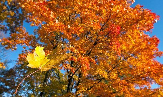 O frunză s-a desprins din pom…