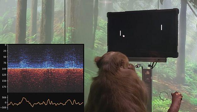 Noul proiect al miliardarului Elon Musk: maimuțe implantate cu microcipuri care se joacă jocuri video cu puterea minții
